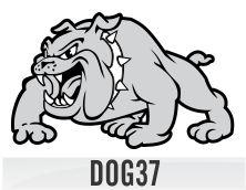 dog37